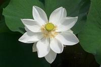 flower-391607-h