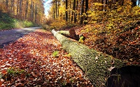 siedlung-forest-autumn-291084-h
